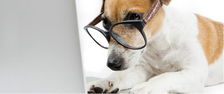 dog wearing glasses on a laptop